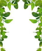 Groene bladeren frame - soortgelijke beelden beschik — Stockfoto