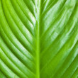 Green leaf background — Stock Photo #1407924