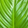 Royalty-Free Stock Photo: Green leaf background