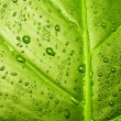 Green leaf texture — Stock Photo #1607774