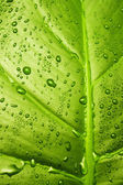 Grünes blatt-textur — Stockfoto