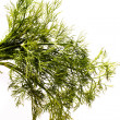 Dill isolated over white — Stock fotografie