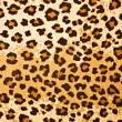 Leopard textured background — Stock Photo