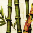 Textured bamboo background — Photo