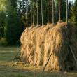 Hay — Stock Photo #2135950