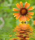 Flowers in a garden — Stock Photo