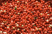 Texture from berries of a red cowberry — Stock Photo