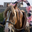 Stock Photo: Decorated horse in harness.
