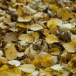 The fallen down autumn foliage — Stock Photo