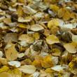 The fallen down autumn foliage — Stock Photo