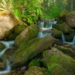 Stock Photo: Small falls in wood. Landscape.