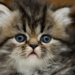 Stock Photo: Small surprised kitten. pet
