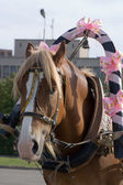 The decorated horse in a harness. — Stock Photo