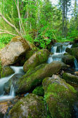 Small falls in a wood. Landscape. — Stock Photo