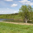 Lonely birch on the bank of river — Stock Photo #2186800