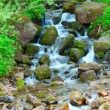 Stock Photo: Small wood falls. A summer landscape