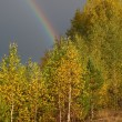 Rainbow over wood in clouds — Stock Photo