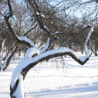 Curly Tree under Snow — Stock Photo