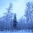 Winter morning in park — Stock Photo