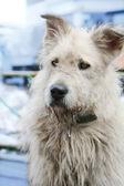 Stray dog, soft focus — Stock Photo