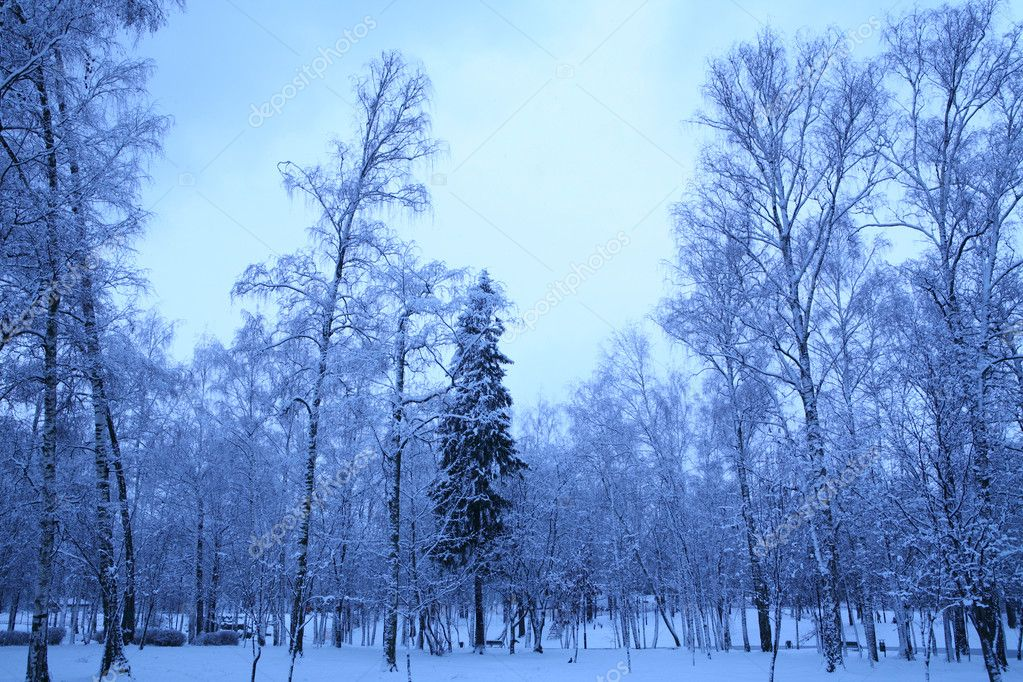 Early winter morning in park Lianozovo, Moscow, Russia — Stock Photo #1187593