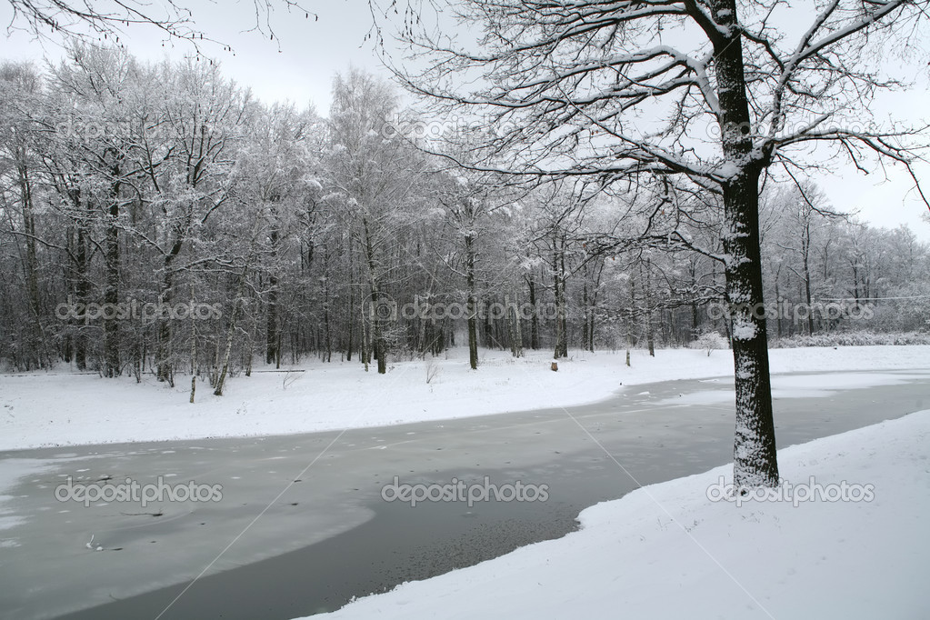 Winter landscape with wood and lake after snowfall — Stock Photo #1187657