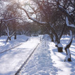 Winter Day in Park with Bright Sun — Stock Photo