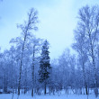 Stock Photo: Winter morning in park