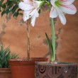 Flowers in Pot — Stock Photo #1393278