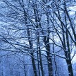 Blue morning after snowfall — Stockfoto