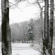 Winterlandschaft — Stockfoto #1393362