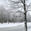Winter landscape — Stock Photo #1405838
