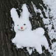 Snow hare - Stock Photo
