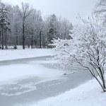 Winter day — Stock Photo