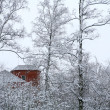 Red house in winter wood — Foto de Stock
