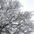 Tree covered by snow — Stock Photo