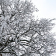 Tree covered by snow - Stock Photo