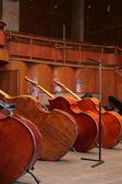 Old bass viols — Stock Photo
