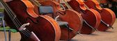Four old bass viols — Stock Photo