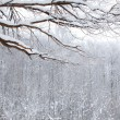 Winter snow wood landscape — 图库照片