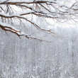 Foto Stock: Winter snow wood landscape