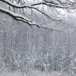 Winter snow wood snow landscape - Stock Photo