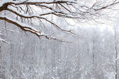 Winter snow wood landscape — Stock Photo