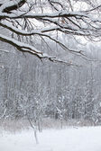 Winter snow wood snow landscape — Stock Photo