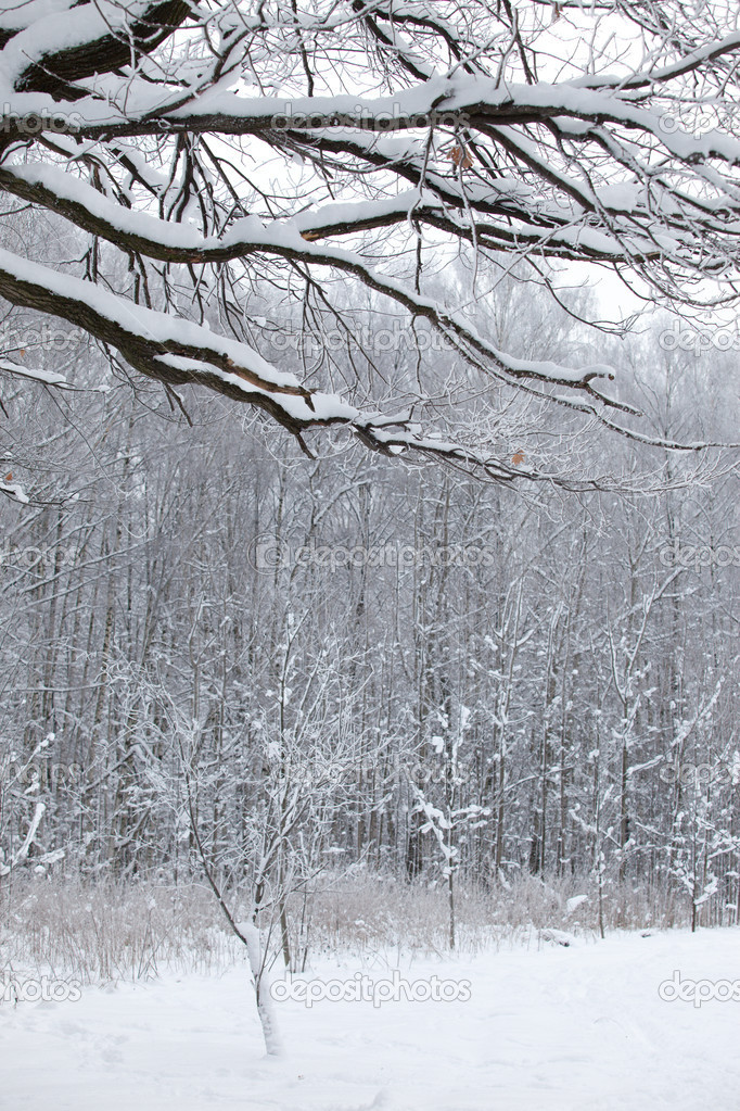 Winter wood snow landscape in the Russia — Lizenzfreies Foto #1666421