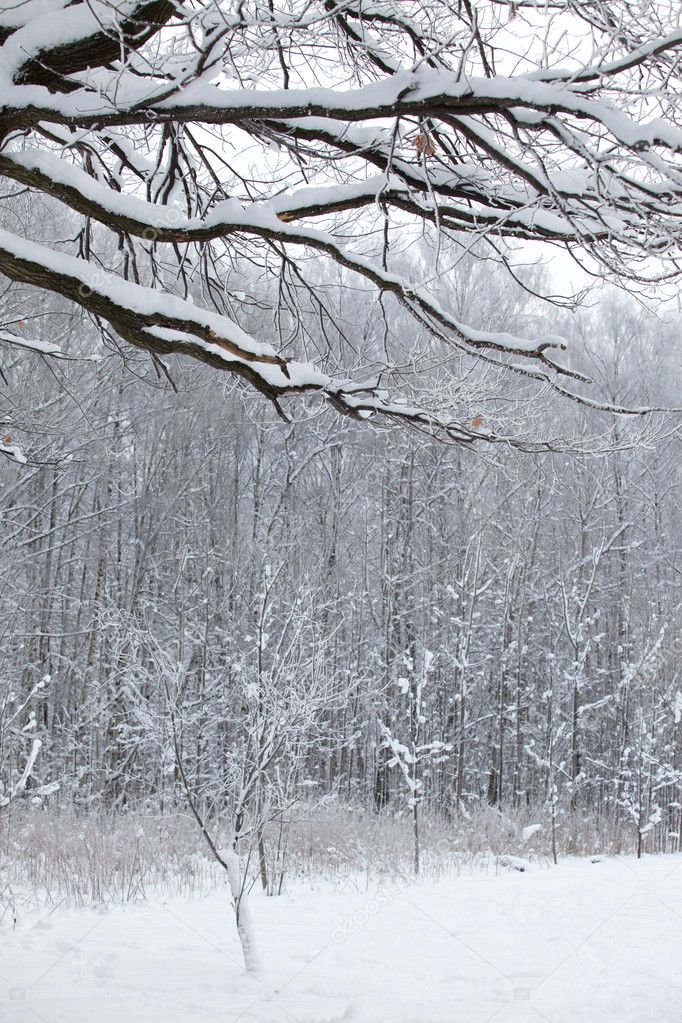 Winter wood snow landscape in the Russia — Stok fotoğraf #1666421