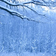 Blue morning in snow wood — Stockfoto