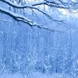 Blue morning in snow wood — 图库照片