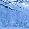 blaue morgens im Schnee Wald — Stockfoto