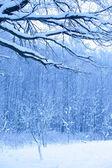 Blå morgon i snö trä — Stockfoto
